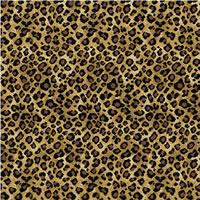 Animal Print Carpets Information From Furnibarn Fine